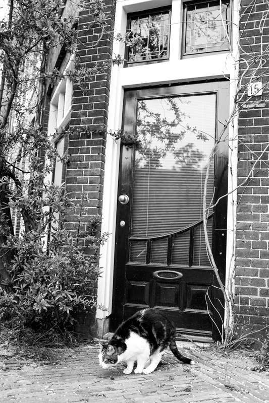 2014_04_12-Haarlem,-NH-113